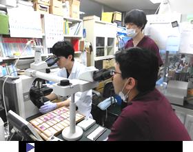 微生物検査ワークショップ